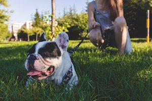 deaf dog care dog park time