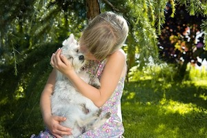 Reasons-to-adopt-a-deaf-dog